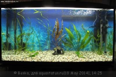 Запах тухлой воды в новом аквариуме - IMG_0847.JPG
