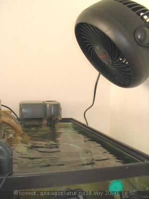Мой ленивый аквариум 170 литров shok  - Cool2.JPG