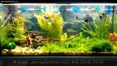 Мой новый аквариум 290 литров Khaak  - IMG_20140521_203824.jpg