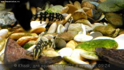 Мой новый аквариум 290 литров Khaak  - IMG_20140521_204033.jpg