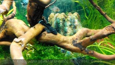 Мой новый аквариум 290 литров Khaak  - IMG_20140521_210825.jpg