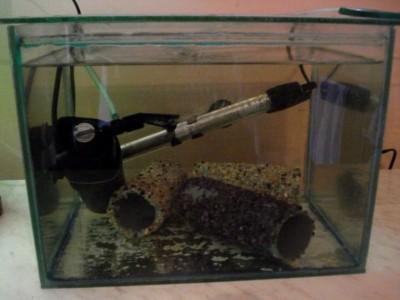 Карантин рыб в аквариуме - DSC07143.JPG