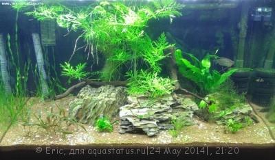 Мой первый аквариум-травник 140 литров Eric  - WP_20140503_008.jpg