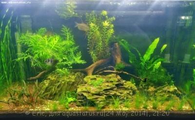 Мой первый аквариум-травник 140 литров Eric  - WP_20140517_002.jpg