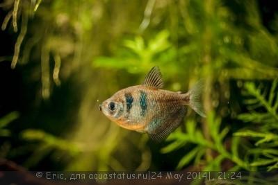 Мой первый аквариум-травник 140 литров Eric  - SavedImage(9).jpg