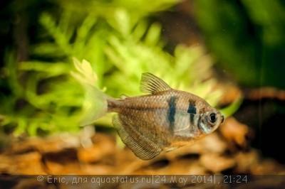 Мой первый аквариум-травник 140 литров Eric  - SavedImage(10).jpg