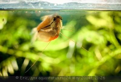 Мой первый аквариум-травник 140 литров Eric  - SavedImage(12).jpg