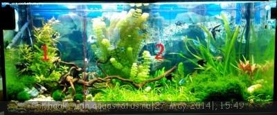 Мой новый аквариум 290 литров Khaak  - IMG_20140527_154417.jpg