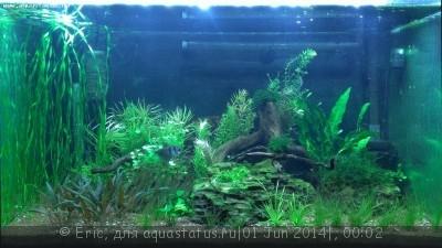 Мой первый аквариум-травник 140 литров Eric  - WP_20140531_005.jpg