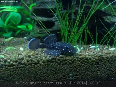 Мой первый аквариум-травник 140 литров Eric  - WP_20140531_001.jpg