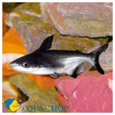 Как выбирать аквариумных рыбок чтоб они могли жить вместе. - a4f50.jpg