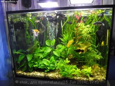 Мой ленивый аквариум 170 литров shok  - SAM_0292.JPG