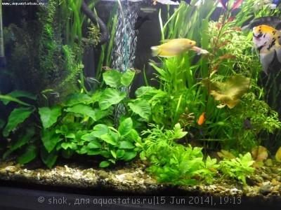 Мой ленивый аквариум 170 литров shok  - SAM_0295.JPG