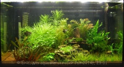 Мой первый аквариум-травник 140 литров Eric  - DSCN8597.JPG
