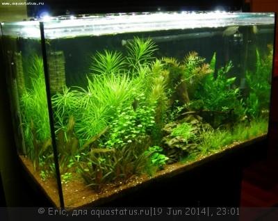 Мой первый аквариум-травник 140 литров Eric  - DSCN8598.JPG