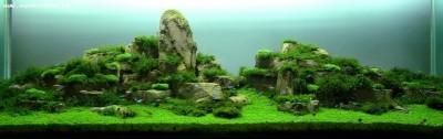Все о выращивании аквариумных растений доступными словами - фоткиа.jpg
