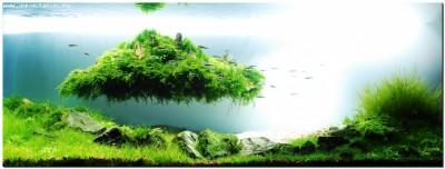 Все о выращивании аквариумных растений доступными словами - фото аквас.jpg