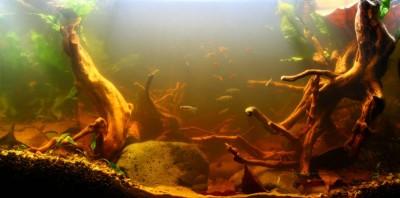 Все о выращивании аквариумных растений доступными словами - биотоп.jpg