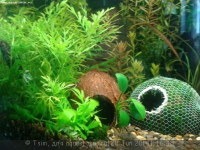 Мой первый аквариум 150 литров Tsim  - Кокосы.jpg