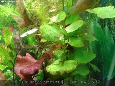 Мой первый аквариум 150 литров Tsim  - Причина 2.jpg