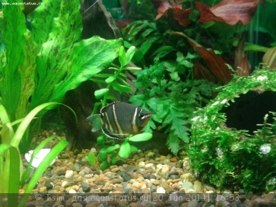 Мой первый аквариум 150 литров Tsim  - аватара.jpg