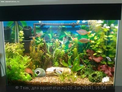 Мой первый аквариум 150 литров Tsim  - Вот так выглядим.jpg