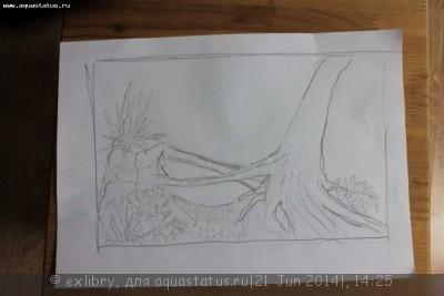 Аквариум Дождевой лес 120 литров exlibry  - IMG_2057.JPG