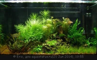 Мой первый аквариум-травник 140 литров Eric  - DSCN8616.JPG