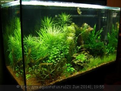 Мой первый аквариум-травник 140 литров Eric  - DSCN8617.JPG