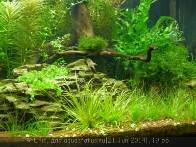 Мой первый аквариум-травник 140 литров Eric  - DSCN8626.JPG