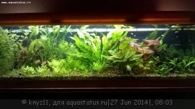 Фото аквариумов объемом свыше 401 литра - WP_20140626_20_45_37_Pro.jpg