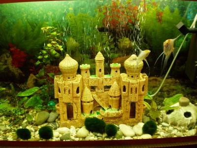 Мой первый аквариум 130 литров denis-gruenk  - P1020104.JPG