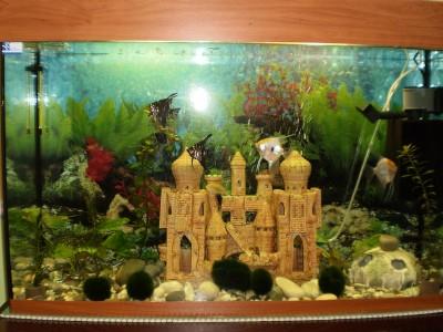 Мой первый аквариум 130 литров denis-gruenk  - P1020091.JPG