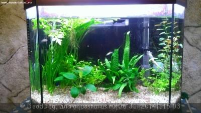 Проблемы с балансом неоднозначно растут растения  - WP_20140706_012.jpg