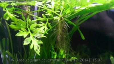 Проблемы с балансом неоднозначно растут растения  - WP_20140706_020.jpg