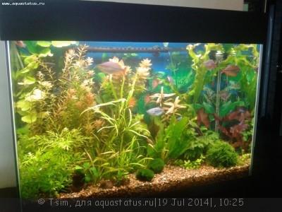 Мой первый аквариум 150 литров Tsim  - 000.jpg