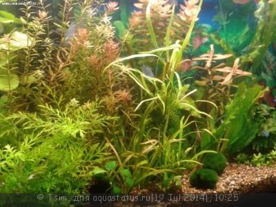 Мой первый аквариум 150 литров Tsim  - 222.jpg