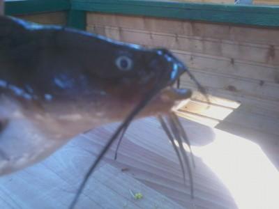 Помогите опознать рыбку опознание рыб  - Фото-0020.jpg