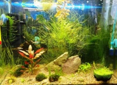 Мой аквариум 35 литров Студентка  - DSC03666.JPG