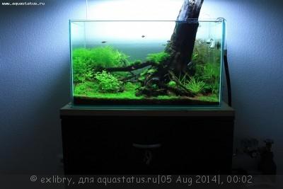 Аквариум Дождевой лес 120 литров exlibry  - !IMG_2941.jpg
