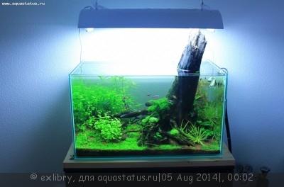 Аквариум Дождевой лес 120 литров exlibry  - !IMG_3276.jpg