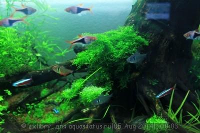 Аквариум Дождевой лес 120 литров exlibry  - !IMG_3283.jpg