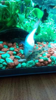 Дезинфекция аквариума - IMAG0886.jpg