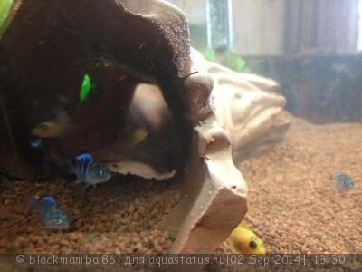 Помогите опознать рыбку опознание рыб  - EqAeclJ0rtc.jpg