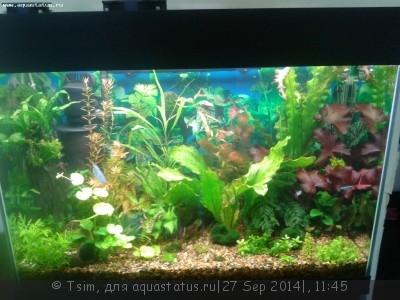 Мой первый аквариум 150 литров Tsim  - 999.jpg