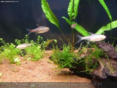 Помогите опознать рыбку опознание рыб  - P1050251.JPG