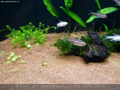 Помогите опознать рыбку опознание рыб  - P1050228.JPG