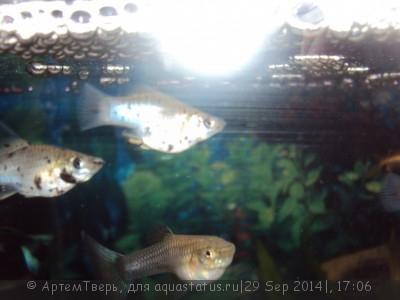 Помогите опознать рыбку опознание рыб  - DSC05886.JPG
