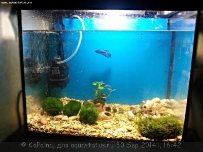 Аквариум новичка для релакса 25 литров KaPalna  - image (1).jpg
