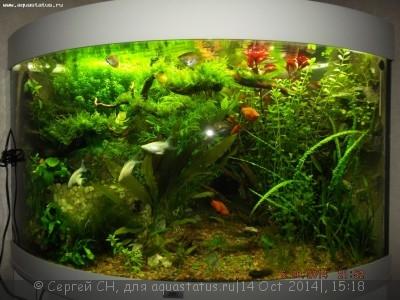 Коряга в аквариуме - DSCF4246.JPG